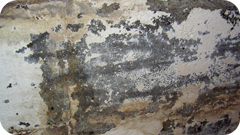 Mold Growth in Florida Apartment Building